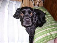 Highlight for Album: Bucky The Dog Photos